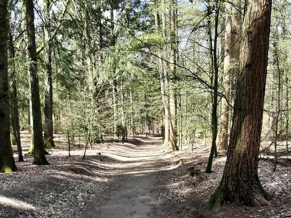 Bos bij de Posbank