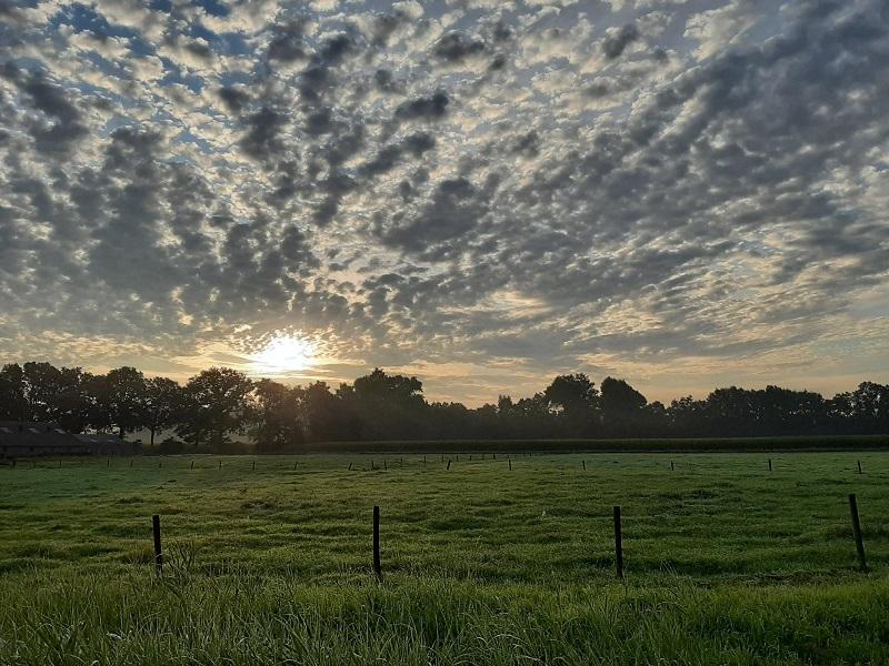 Een weiland bij zonsopkomst